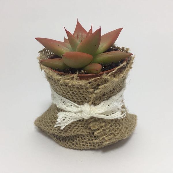 Suculenta en saco de lazo / Succulent Sack Lace - mod 02