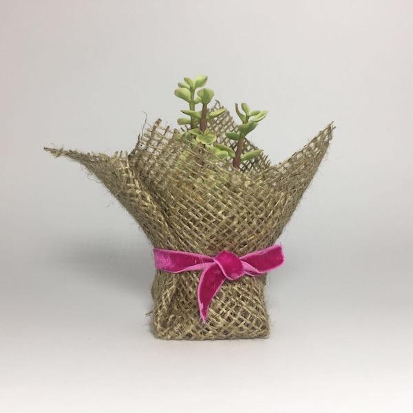 Suculenta clásica con cordón / Succulent Classic Lace mod 05