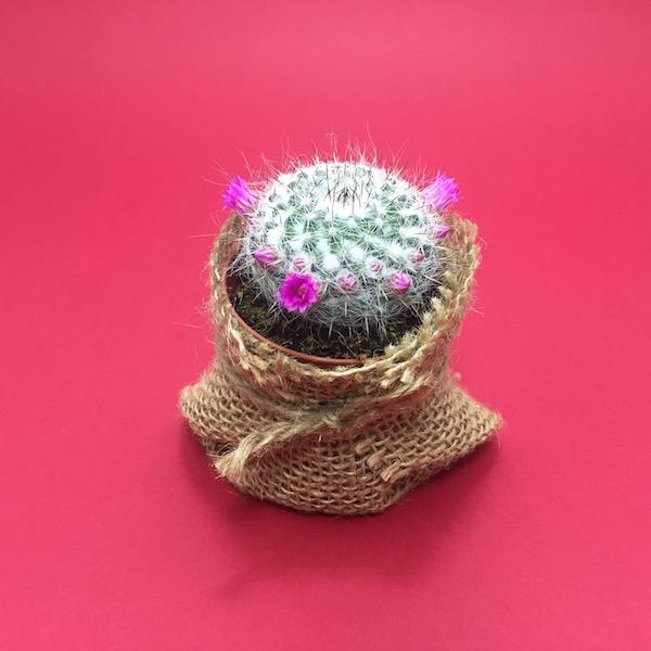 Cactus en saco de yute / Cactus Sack Jute mod 07