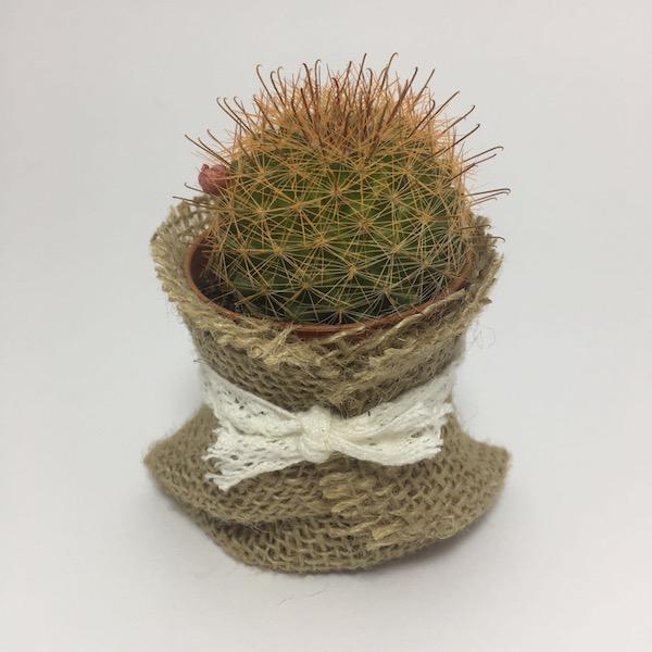 Cactus en saco con lazo / Cactus Sack Lace mod 8