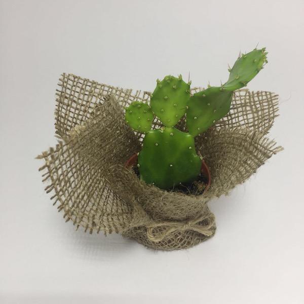 Cactus clásico / Cactus Classic mod 9