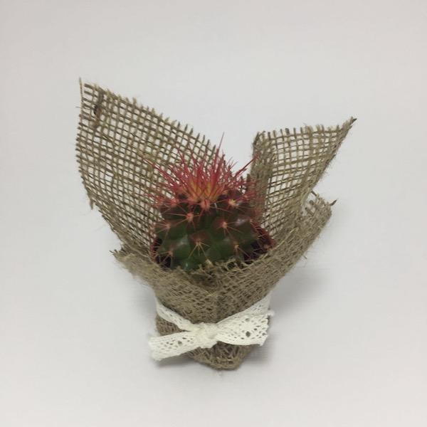 Cactus clásico con lazo / Cactus Classic Lace mod 11