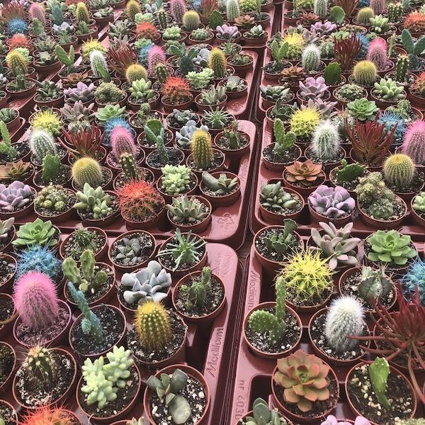 Bandejas y Lotes de plantas