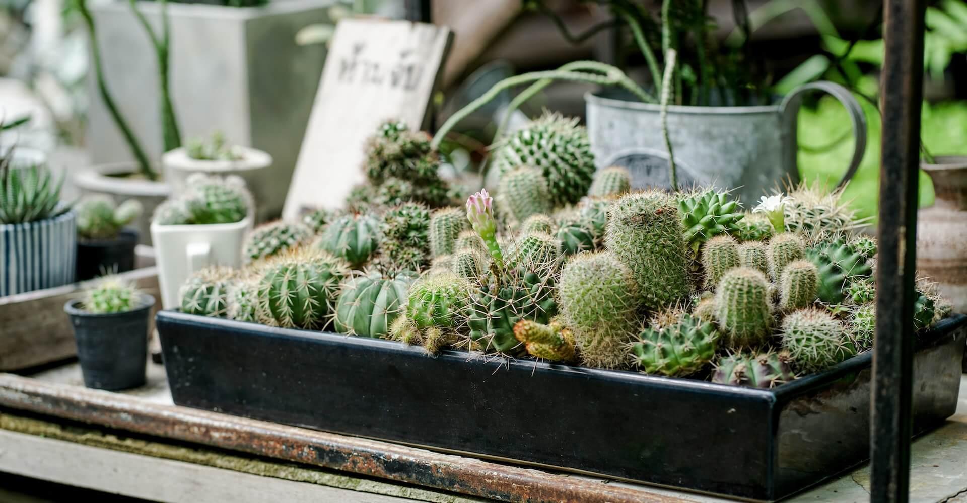 Catálogo y exposición. Decoración de bodas y comuniones con cactus y suculentas. Bodas y celebraciones