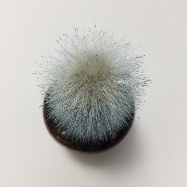 Cactus Cleistocactus Strausii. Maceta de plástico redonda de 5,5cm diámetro y 5cm de alto color azul