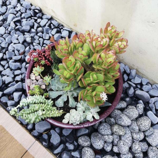 Decoración de hogar y jardines. Cactus y suculentas. El Taller del Encanto. Tienda online