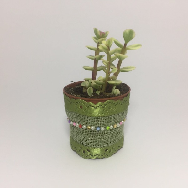 Fiona Succulent Boho Chic Style