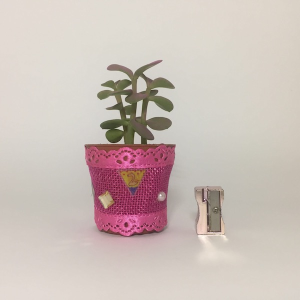 Catálogo y exposición de cactus y suculentas para decorar 12