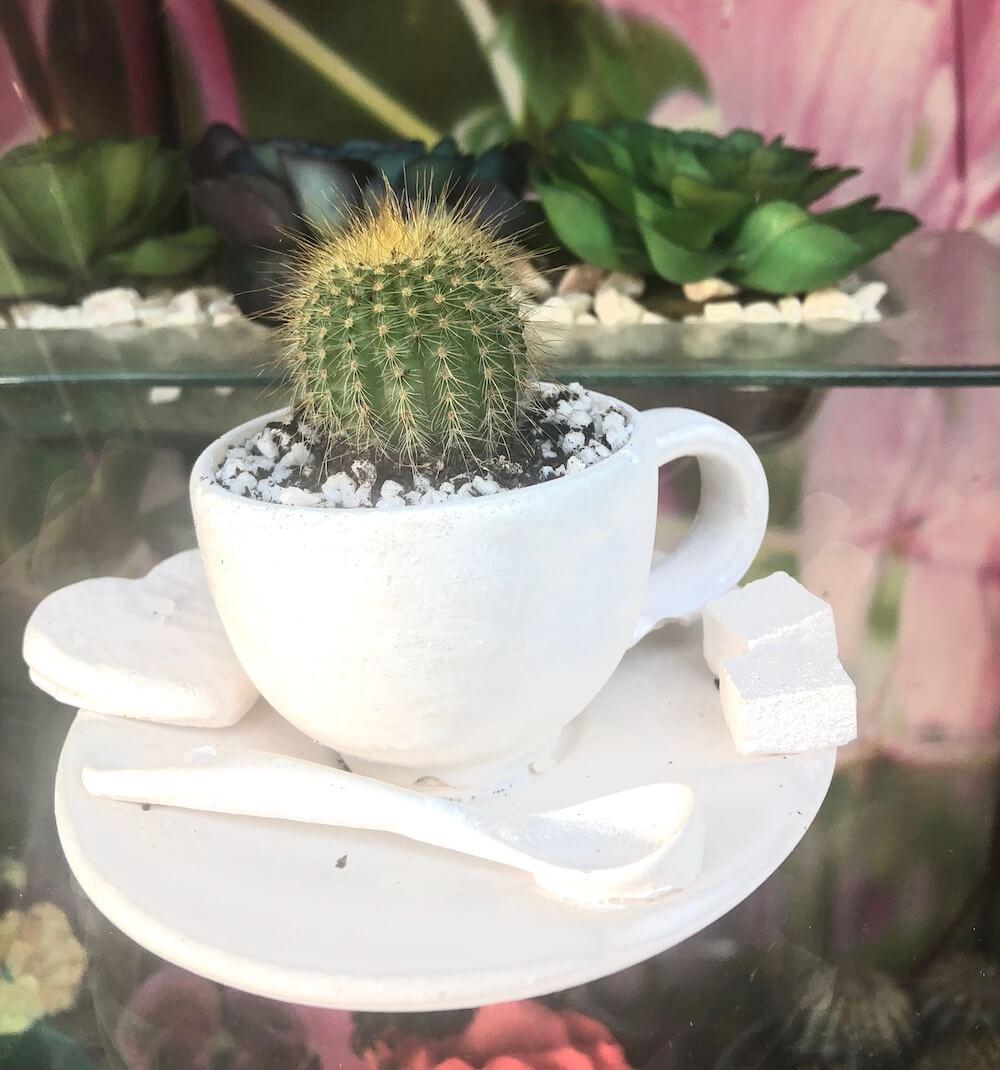 Bienvenidos a El Taller del Encanto. Cactus y suculentas 3
