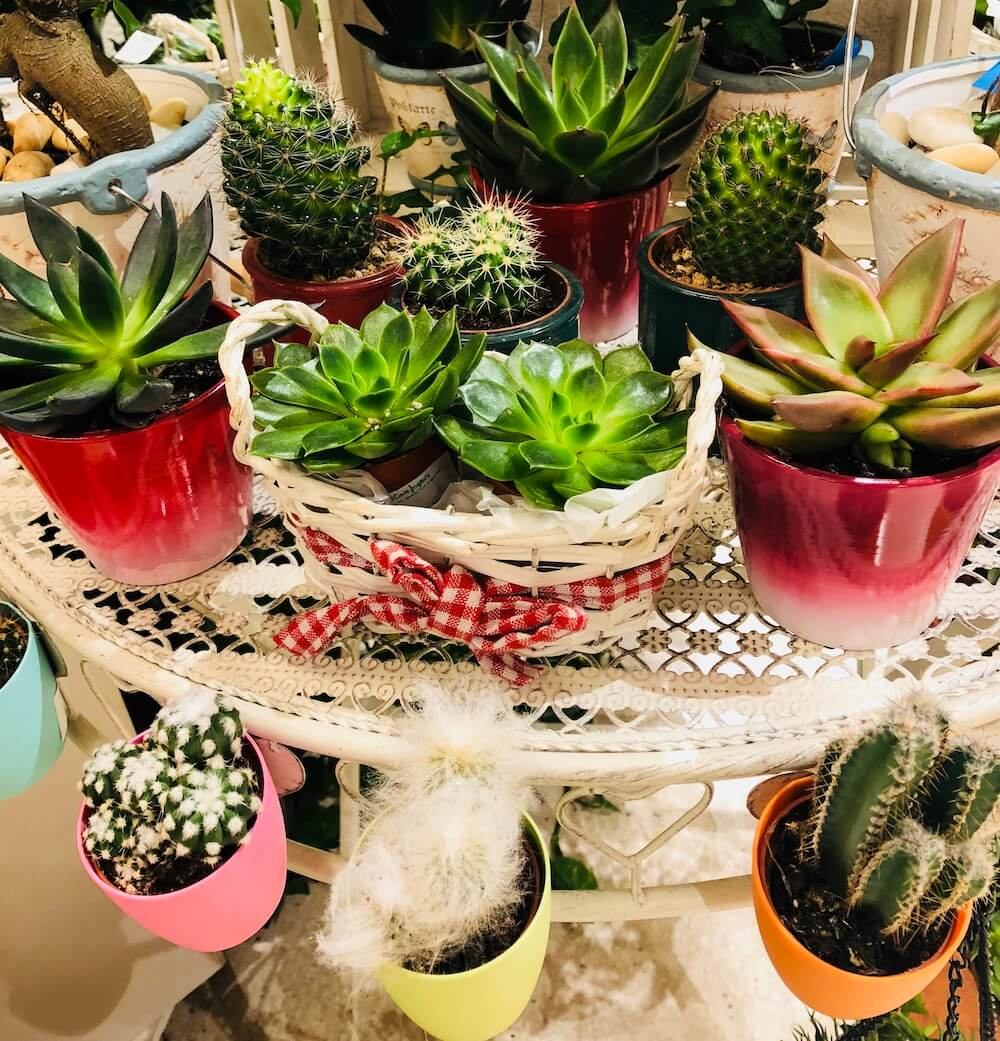 Bienvenidos a El Taller del Encanto. Cactus y suculentas 4