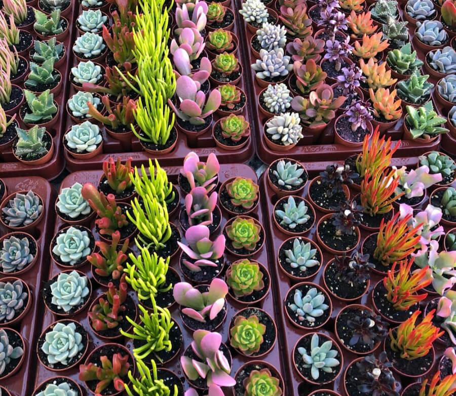 Cactus y suculentas. Newsletter. Descuentos. Diseño exclusivo para decorar