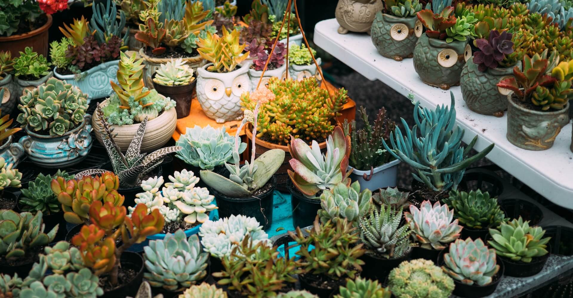 Nosotros, El Taller del Encanto. Asesoramiento en decoración de eventos y celebraciones con cactus, crasas y suculentas