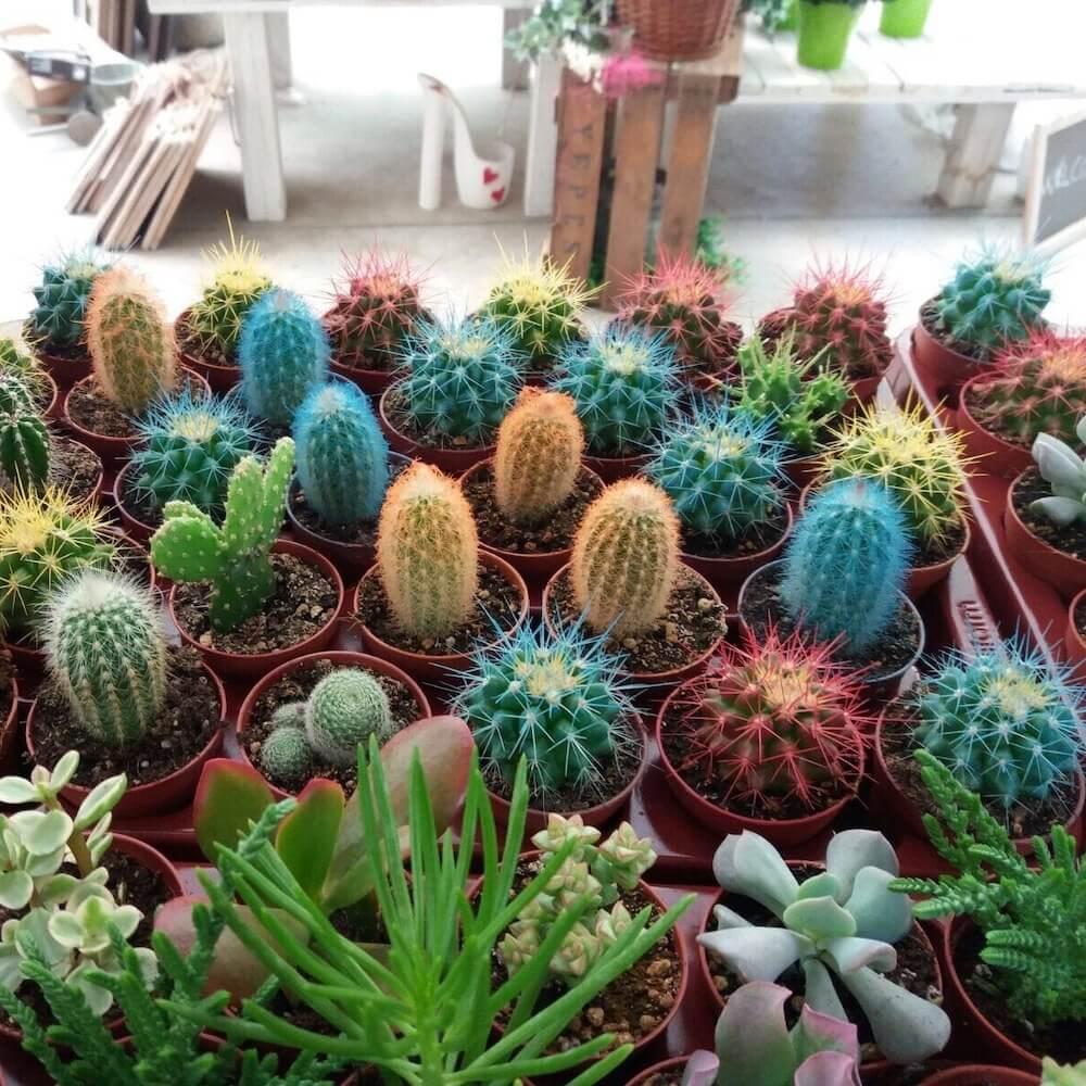 Nosotros El Taller del Encanto, decoración exclusiva de cactus y suculentas 2