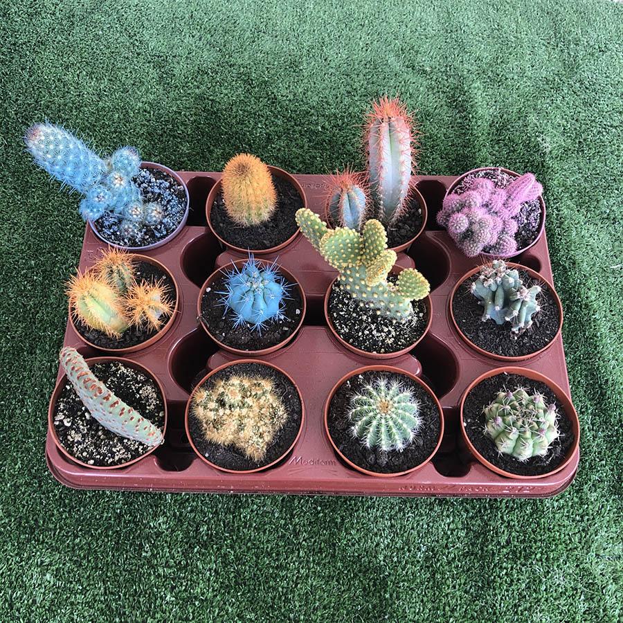Lote bandejas cactus. El taller del encanto. Decoración de jardines e interiores