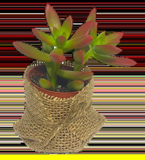Nosotros El Taller del Encanto, decoración exclusiva de cactus y suculentas 4