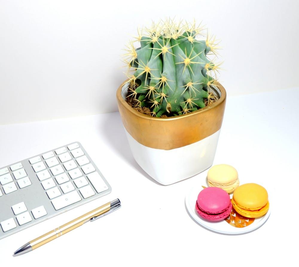 Ideas para decorar tu negocio. Cactus y suculentas. El taller del Encanto
