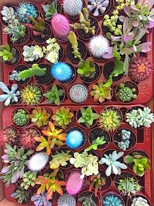 Nosotros El Taller del Encanto, decoración exclusiva de cactus y suculentas 5